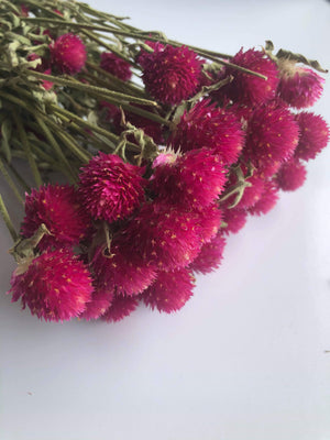 Globe Amaranth - fuchsia - Dried- 4oz _sola_wood_flowers