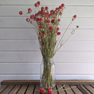 Globe Amaranth - Red - Dried- 4oz _sola_wood_flowers