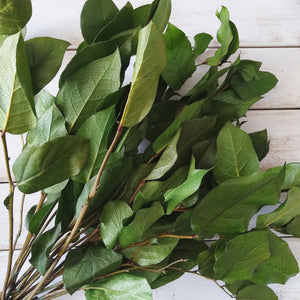 Salal Lemon Leaf-Preserved Natural Green - 10 stems _sola_wood_flowers