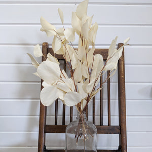 Silver Dollar Eucalyptus -Preserved Bleached _sola_wood_flowers