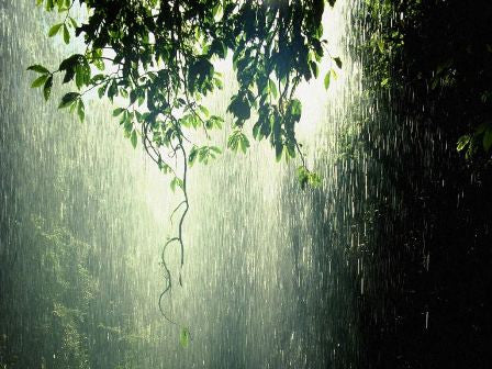 Rainwater Harvesting - Environmental Benefits