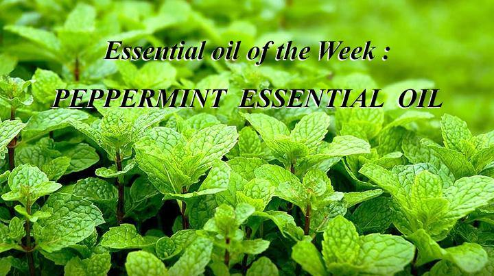 Blog 48: Essential Oil of the Week: Peppermint essential oil - Keya Seth Aromatherapy