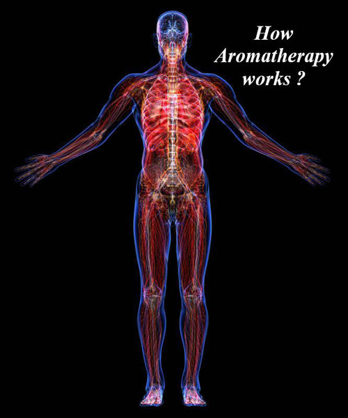 How aromatherapy works