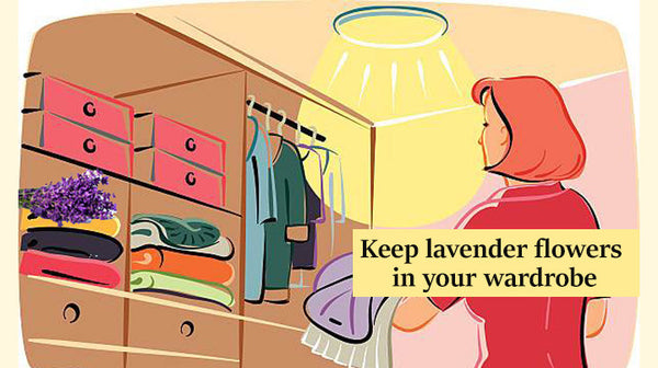 keep your clothes fresh with lavender