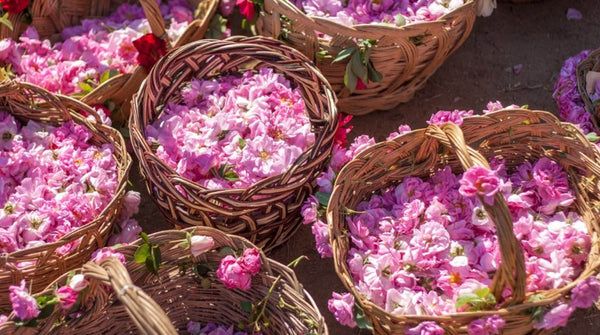 why rose essential oil is so expensive