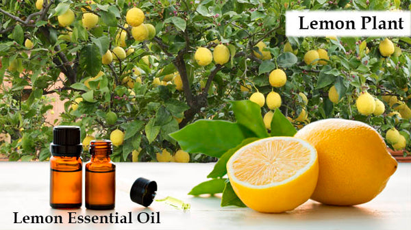 lemon essential oil for jet lag