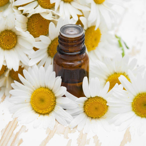 Chamomile Fragrance Oil - Your Crafts
