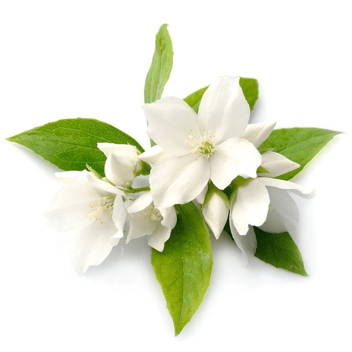 Jasmine Fragrance Oil - Your Crafts