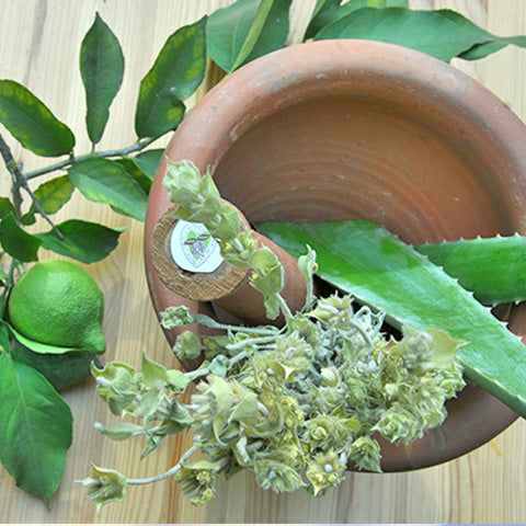 5 Miracle plants to lighten skin naturally.