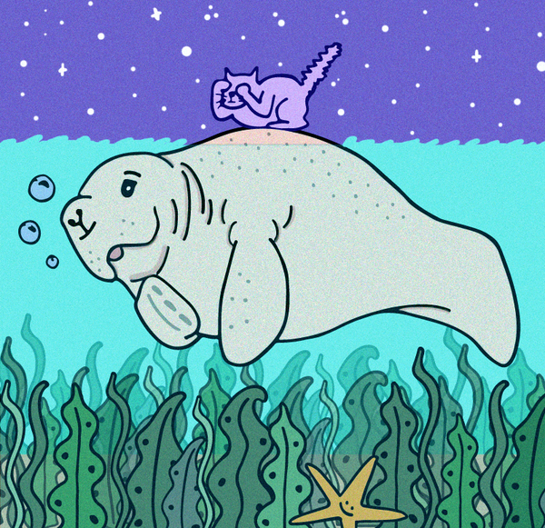 Merpola Manatee Illustration Sketch