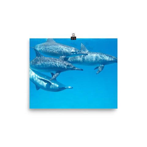 Dolphins Photo paper poster