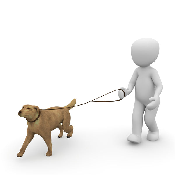 How to find the perfect dog leash?