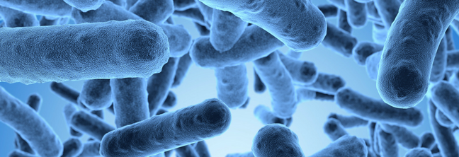 E. Coli: Causes, Symptoms & Prevention