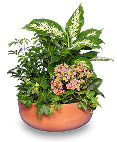 GARDEN PLANTER Green & Blooming Plants - Chic128