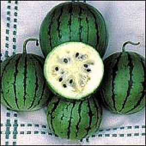 White Siberian  Heirloom Watermelon