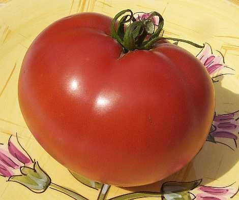 Sub-Arctic Plenty - Heirloom Tomato