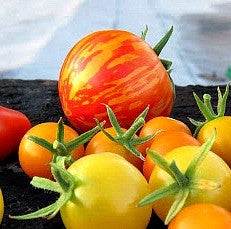 Red Zebra - Heirloom Tomato