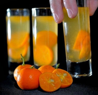 Citrus mitus - Calamondin Orange