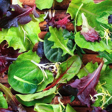 Spicy Mesclun Mix - 15 Baby Greens