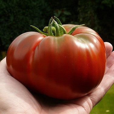 Black Brandywine - Heirloom Tomato