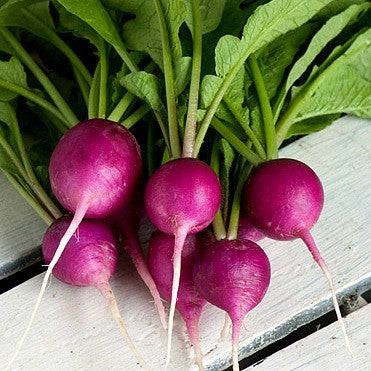 Rainbow Radish Mix  Five Fancy Colors