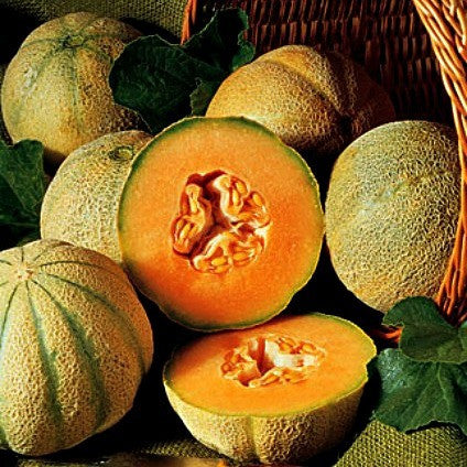 Charentais  - French Heirloom Melon