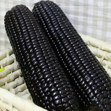 Aztec Black Corn - Ancient Heirloom