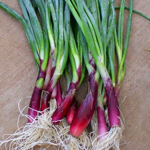 Scarlet Scallion - Japanese Heirloom