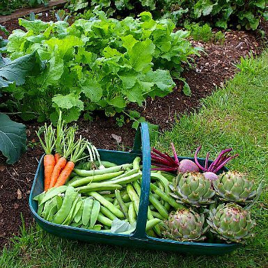 Autumn Garden Collection - Ten perfect veggies