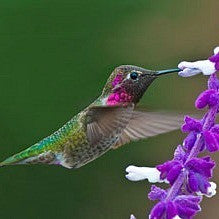 Hummingbird Garden - Gift Collection