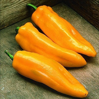Golden Marconi - Italian Sweet Pepper