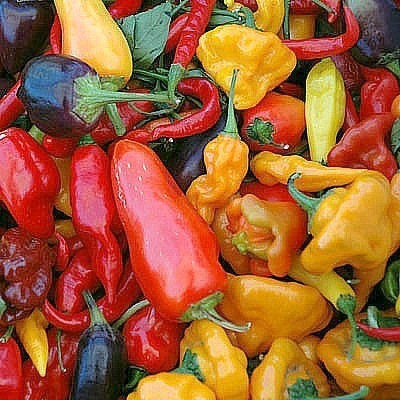 Hot Chili Pepper Collection - Capsicum annuum
