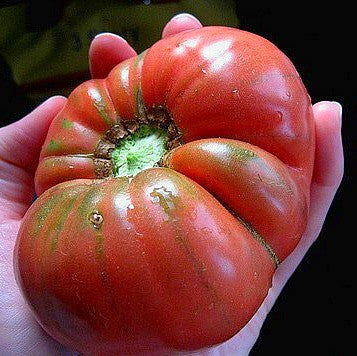 Brandywine Sudduth's Strain - Heirloom Tomato