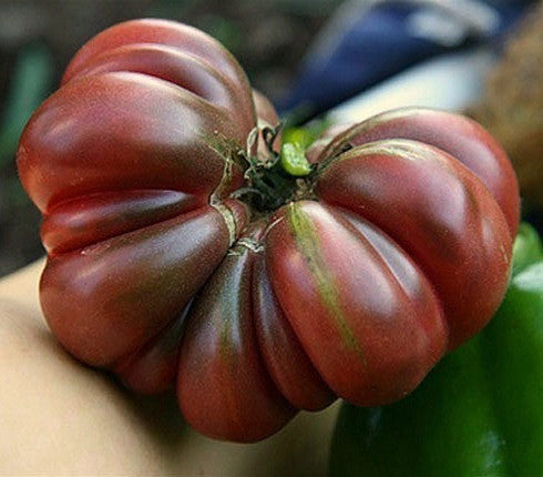 Tim's Black Ruffle - Heirloom Tomato