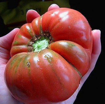 Pink Brandywine - Heirloom Tomato