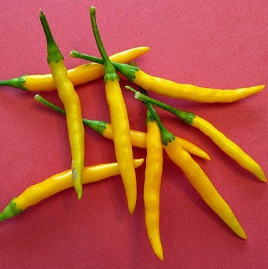 Burapa Thai Yellow - Hot Asian Pepper