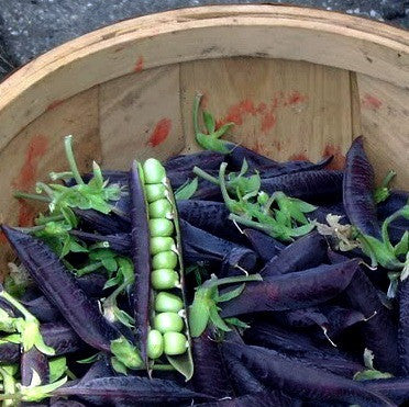 Purple Podded Peas - Blauwschokkers