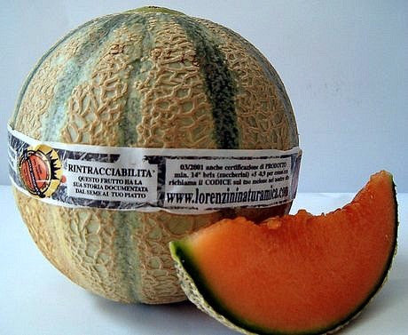 Tuscany Melon   Italian Heirloom