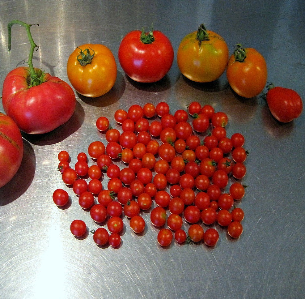 Spoon Tomato - Heirloom Tomato