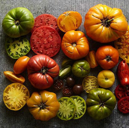 Heirloom Tomato Collection -The Giants