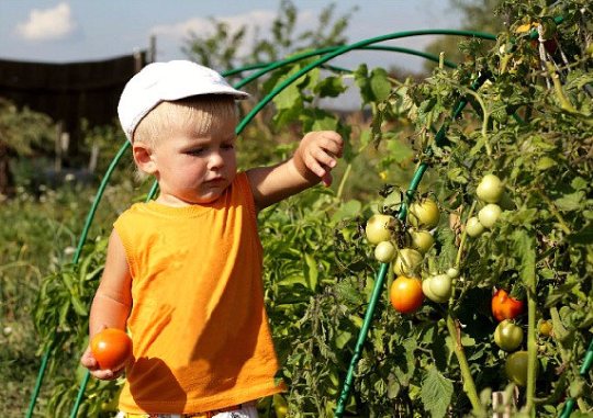 Kid's Garden Collection, eight organic veggies,  easy to grow, fun to eat,