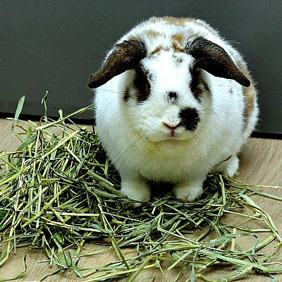 Timothy Hay for Rabbits and Cavies