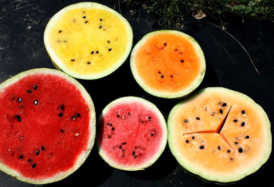 Yellow Moon & Stars Watermelon