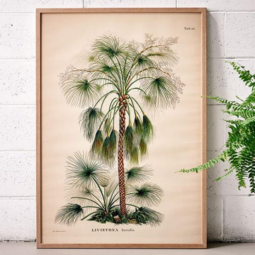 Livistona Palm Print - 700 x 1000 mm