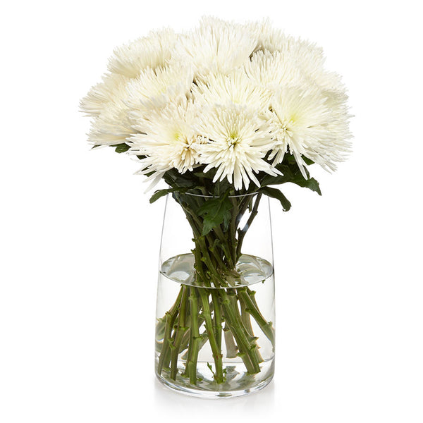 Chrysanthemum Disbud, these cut flowers from Bill's create a stunning display.