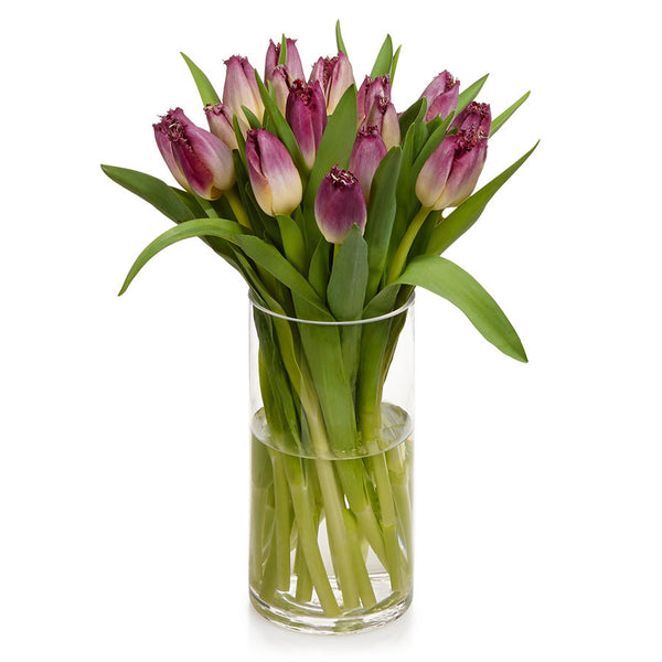 Fringed Tulips, distinctive frayed edge cut flowers at Bill's.