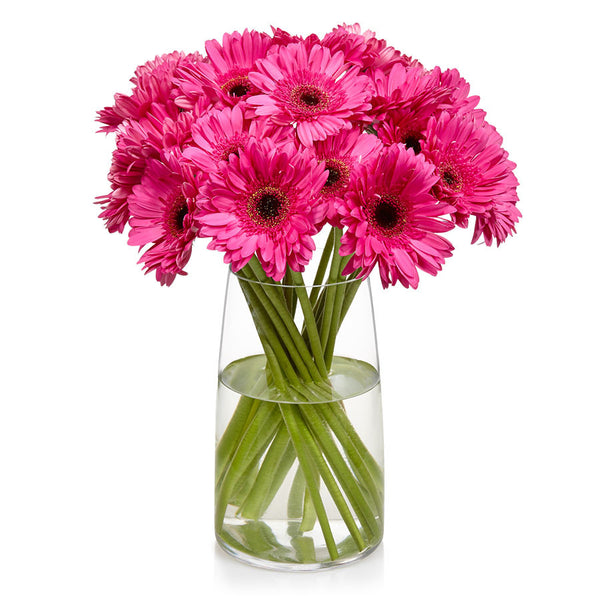 Gerberas, one of Bill's most popular cut flowers.