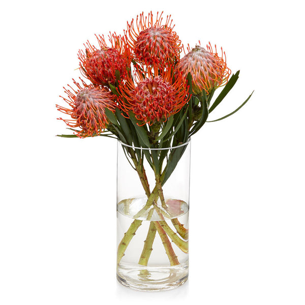 Pin Cushion, seasonal cut flowers for purchase at Bill's.