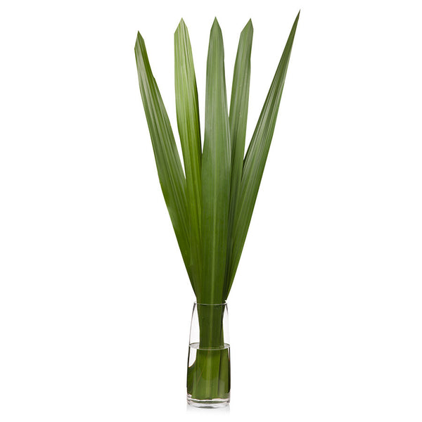 Gymea leaves, make impressive flower arrangements for your home, office or event. Buy from Bill's today.