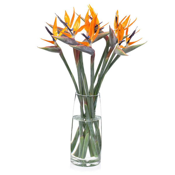Bird of Paradise, beautiful and exotic cut flowers from Bill's.